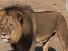 Dentist Kills Cecil....Sets Off FIrestorm