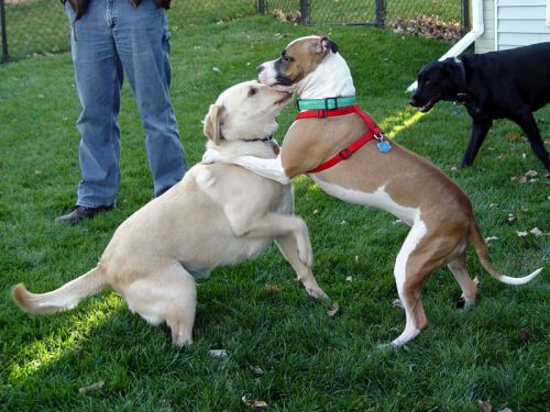 how to train dogs not to fight