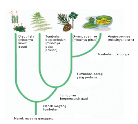 Sistem filogeni tumbuhan