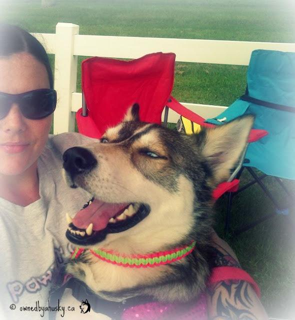 me and my siberian husky