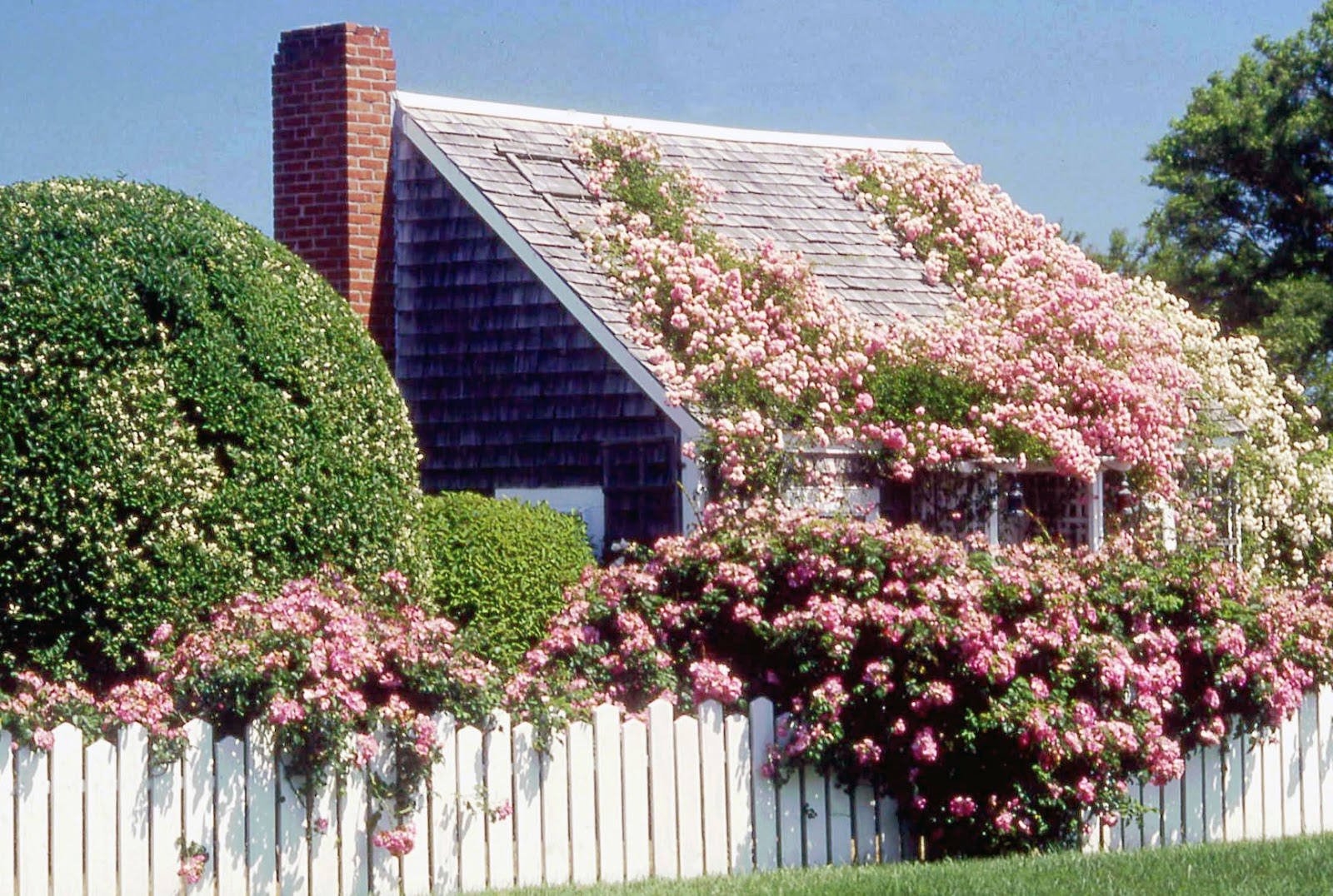 Cape Cod Rose Part - 31: My Fantasy Home On Cape Cod