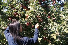 Linvilla Orchard, Media PA, Fall 2010