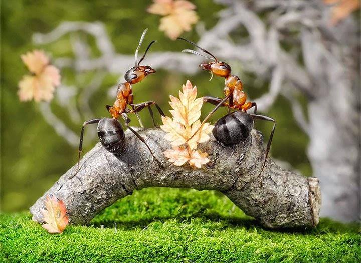 النمل الابيض