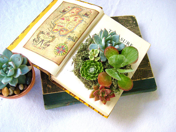 Rooted in Succulents - creative succulent plant arrangements