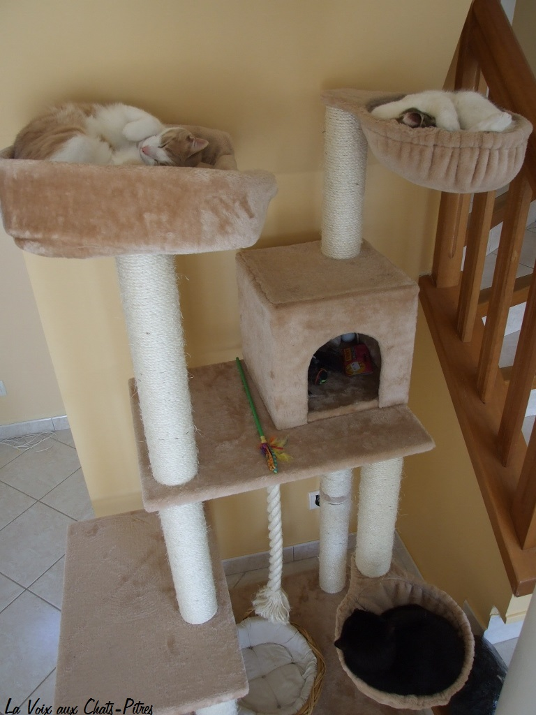 arbre chat hamac. Black Bedroom Furniture Sets. Home Design Ideas