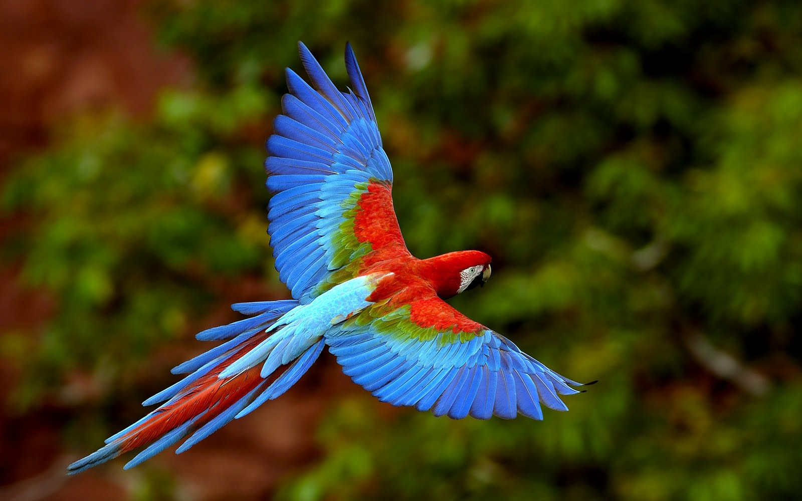 Life is Better with a Cute Outfit: Colorful Birds Wallpapers
