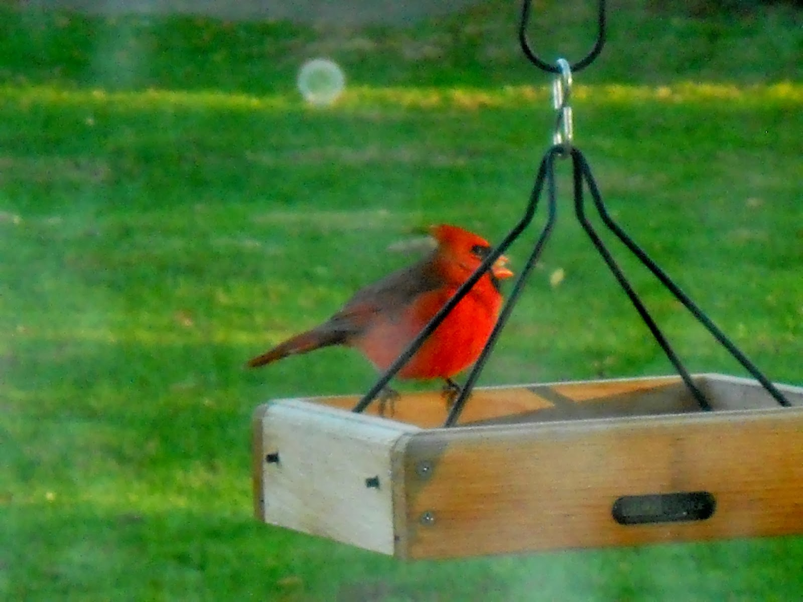 how to attract cardinals in your backyard mother2motherblog