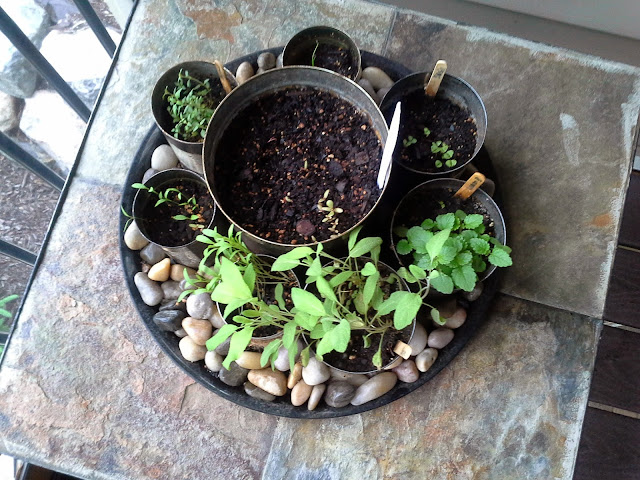tin can herb garden