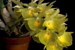 Veja Tipos de Orquídeas