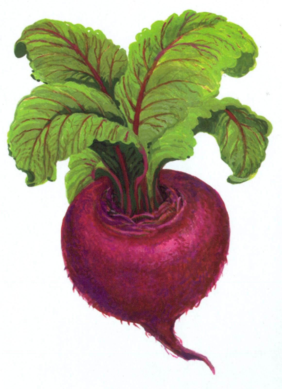 Фото для детей помидор