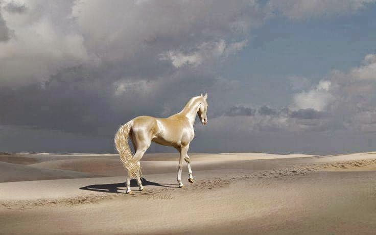 Sinopse: Considerado o cavalo dos Contos de Fadas! O cavalo Akhal Teke é uma das raças mais antigas datando de aproximadamente 3000 a.C. Ele serve para basicamente todos os tipos de função, desde lidas em fazendas, até adestramento, corridas e salto. Sua pelagem é uma das características que mais o destaca. Suas origens de habitação são as areias do deserto. Não é um cavalo originalmente dócil, mas uma vez adestrado, é perfeito! Tende a ter olhos bem grandes e marcados, narinas bem abertas (fator responsável pela expressão atrevida que parece ter), pernas bastante longas e altas, e um corpo estreito, longo e tubular, o que lhe rende uma graça vista em poucas raças. Tem uma estatura mediana e tende a ser mais longo do que forte. Descrição: A foto mostra sob um céu azul claro com algumas nuvens, um imponente cavalo do Turcomenistão andando sobre dunas baixas em uma região árida e deserta. Sobre a pelagem quase dourada do animal incidem os raios de sol, evidenciando brilhos metálicos, como se Akhal Teke tivesse sido banhado em ouro. As patas são brancas e os cascos, no mesmo tom da pelagem. A cauda é volumosa, ondulada, longa, bem escovada com a extremidade ao vento. À esquerda, no chão arenoso, a sombra refletida.