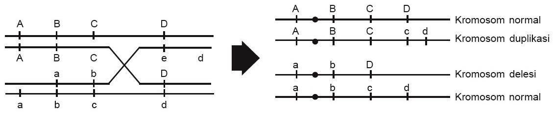 Pengertian mutasi gen dan kromosom biologi penyebab dan contoh mutasi duplikasi dan delesi terjadi bersama sama ccuart Images