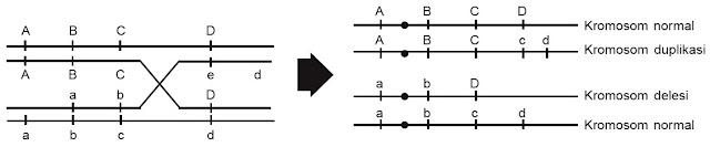 duplikasi dan delesi terjadi bersama-sama