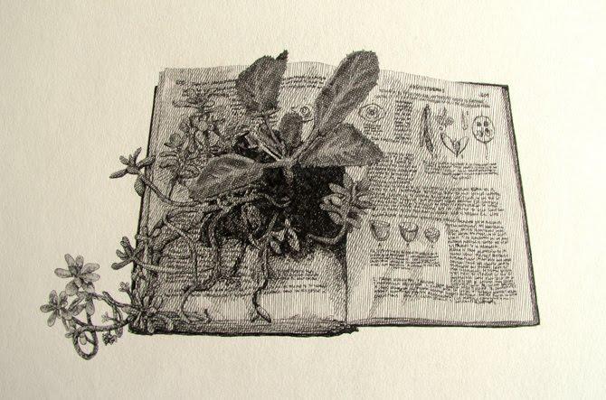 Jolube Consultor botánico