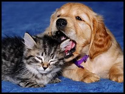 tarjetas de tiernos gatitos y perritos