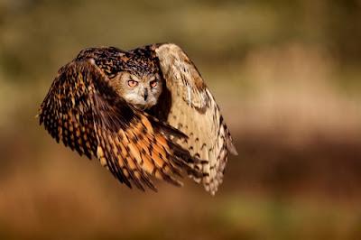 Competencia de fotografia de National Geographic
