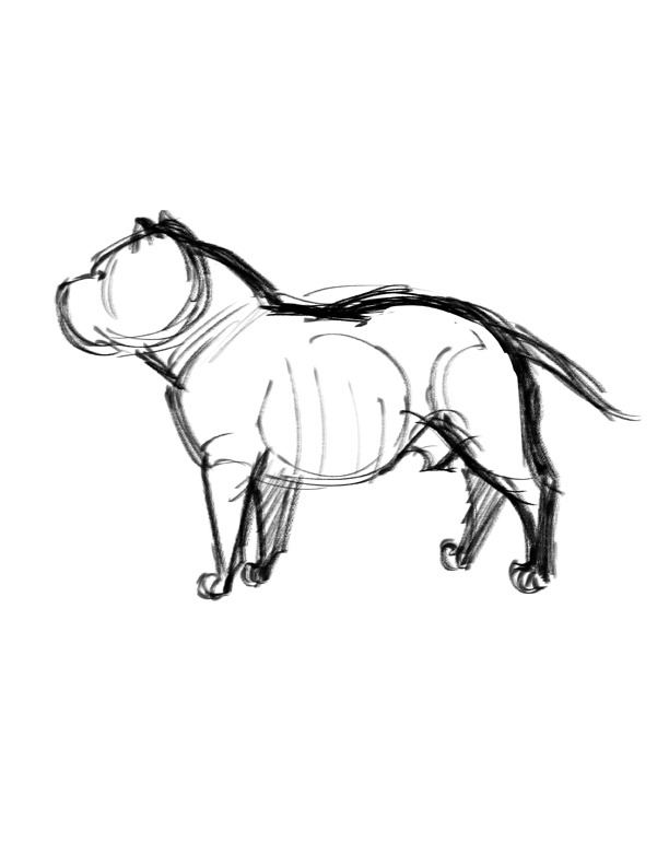 How to draw american bully