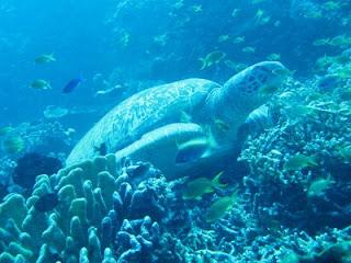 Visitindonesia; Mantehage Island, An Isle Amongst Amazing Scenery Inwards Bunaken Marine Commons Site