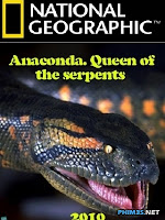 Trăn Nam Mỹ: Chúa Tể Các Loài Trăn