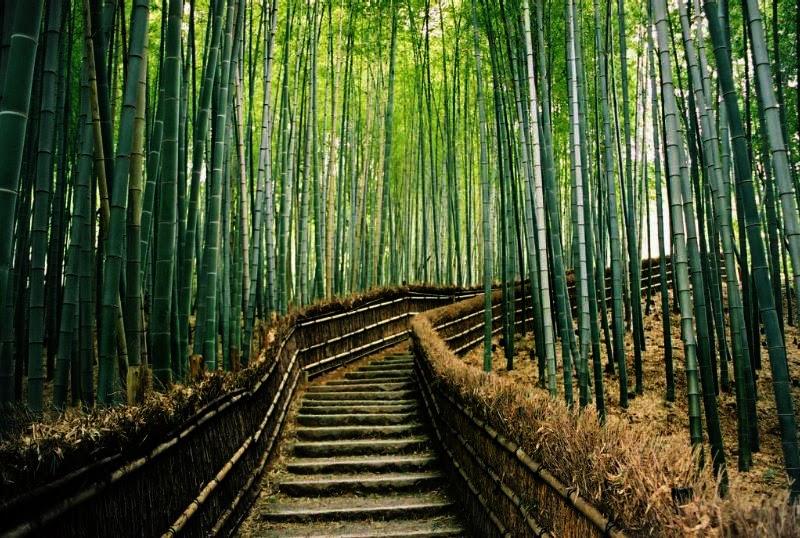 bamboo forest japan best wallpaper views