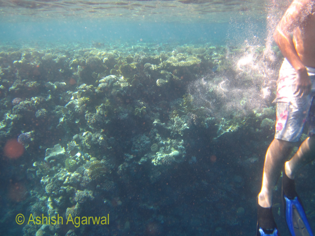 Snorkeling tourist just next to a coral reef in the Ras Muhammad marine park near Sharm el Sheikh