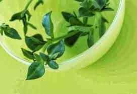 Herbal Anti Septik Atasi Ejakulasi Dini