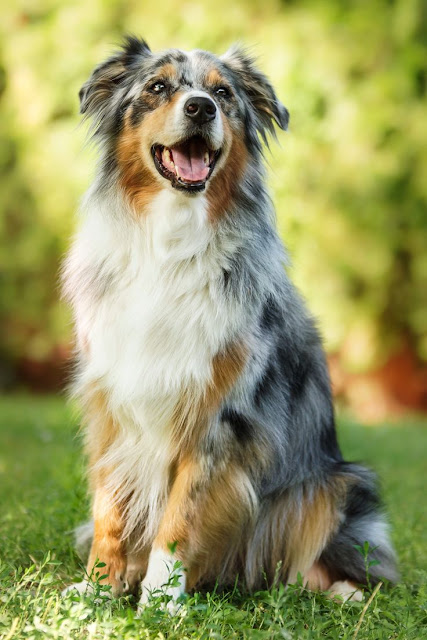 5 Dog Breeds For The Active Owner