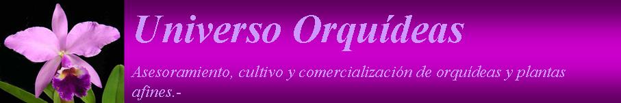 Universo Orquídeas