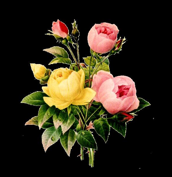Resultado de imagen para flores png gratis