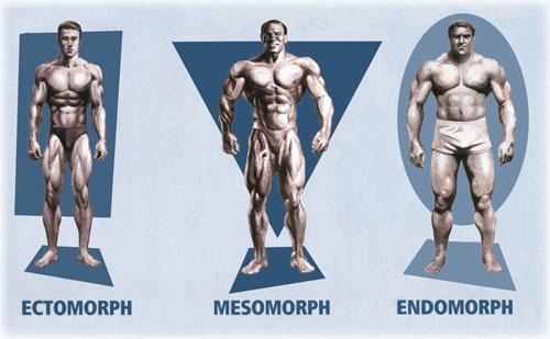 Fisioterapia: Qué son los Biotipos y cuál es el tuyo?
