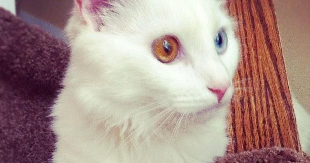 Cat S