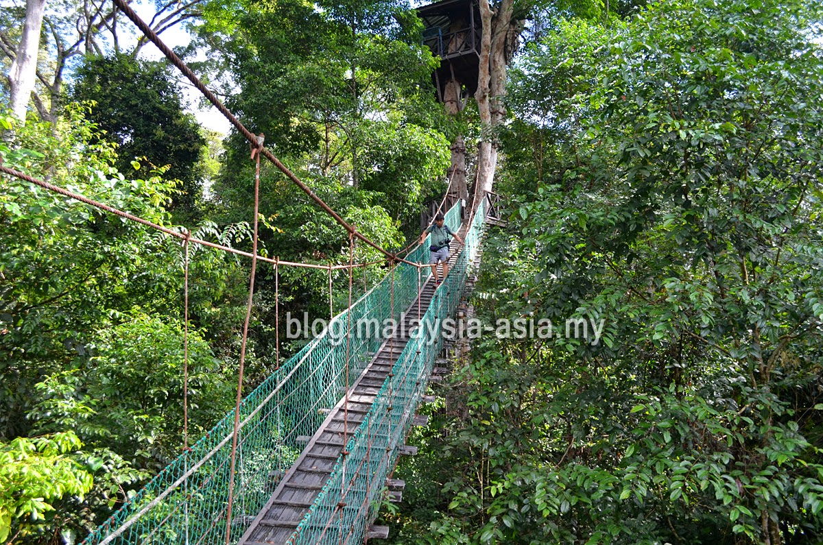 Maliau Basin Canopy Walk in Sabah