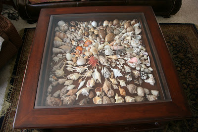 coffee table displaying shells