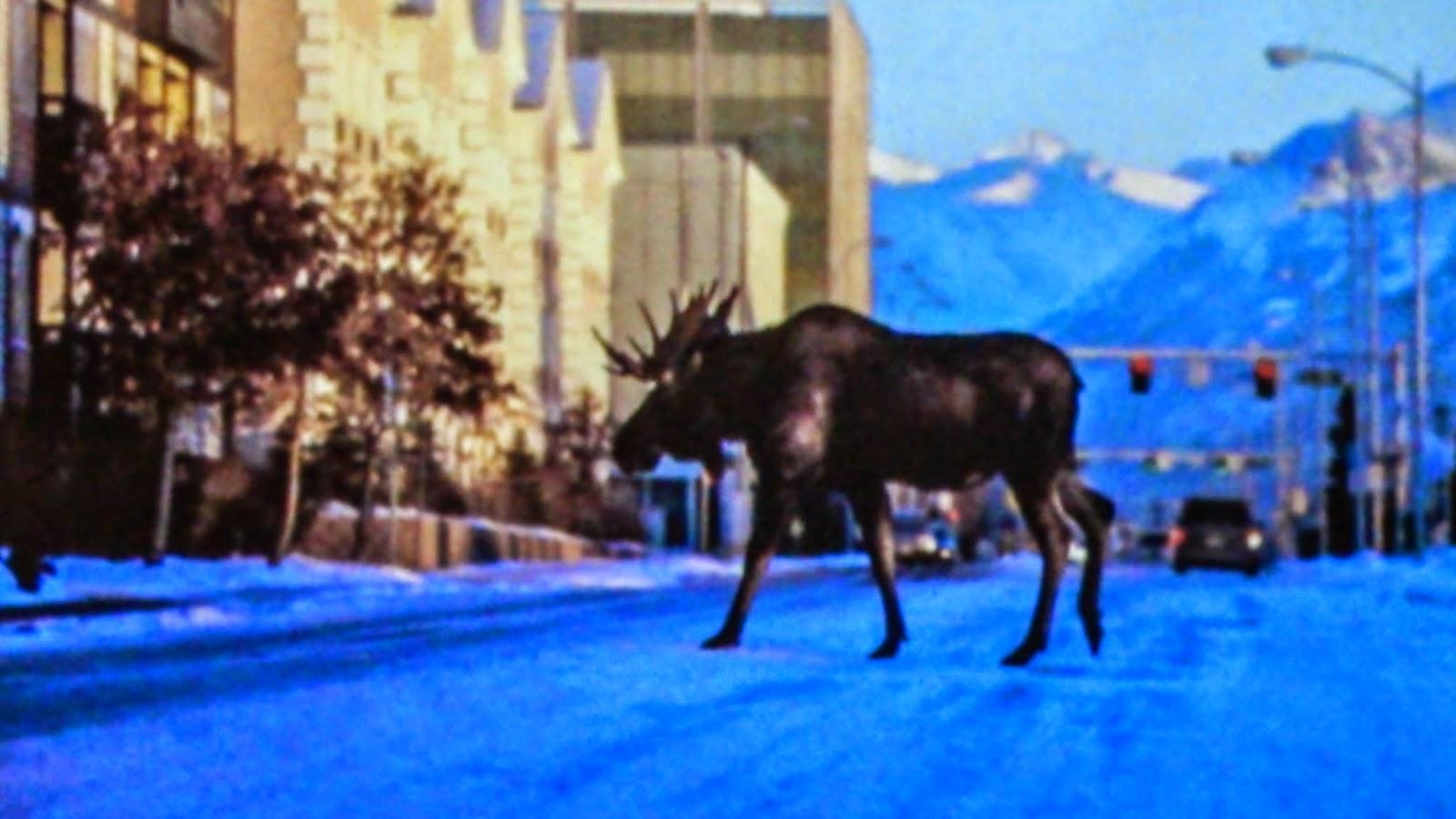 アラスカ、シカ、鹿、雪、ムース、LTMSALON