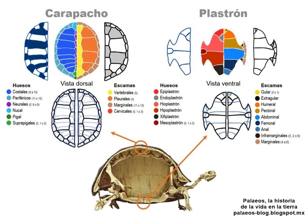 Palaeos, la historia de la Vida en la Tierra: Notas cortas: El ...