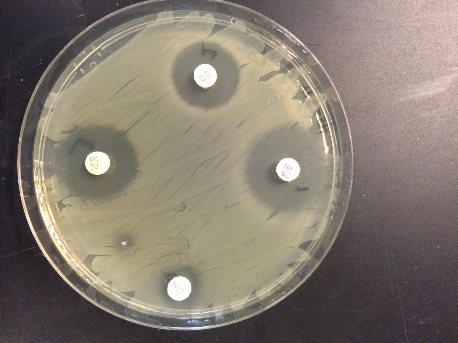 agar dating Intended use hardy diagnostics tryptic soy agar is recommended for use as a general growth medium for the isolation and cultivation of microorganisms.