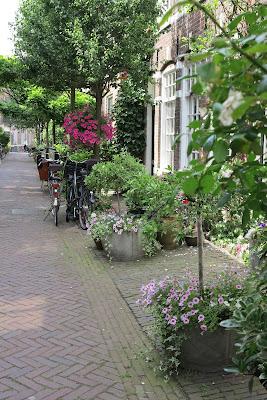 container garden, urban garden, pink, hanging basket, pink, Haafner