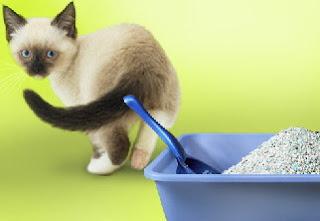 kucing diare, kucing mencret, diarrhea cat, mengatasi kucing diare