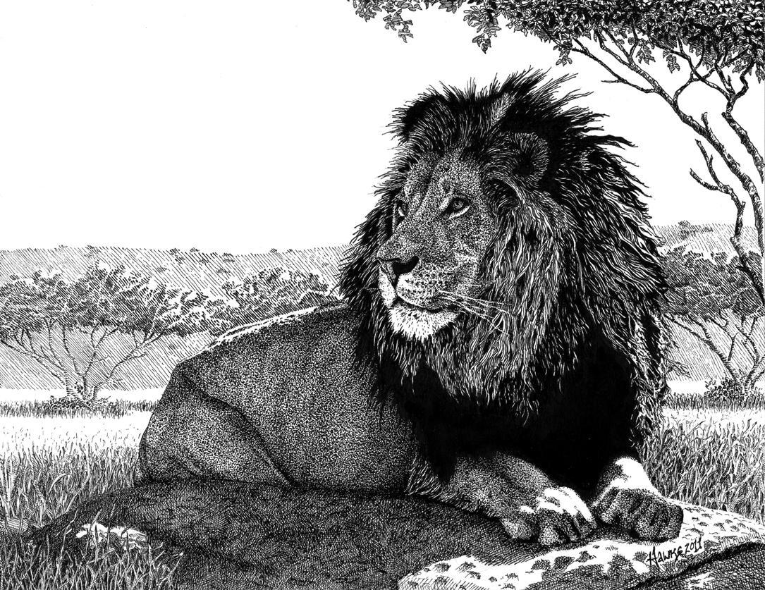 Labels pen ink lion san diego safari park micron pen illustration