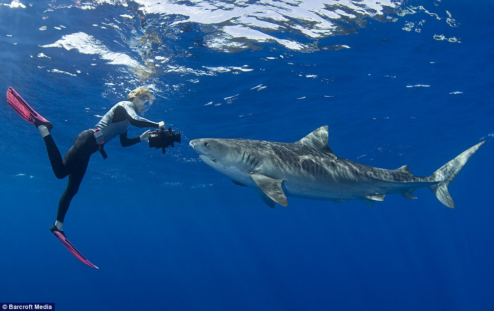 The Best Shark Dive In The World Stefanie And Tiger Sharks