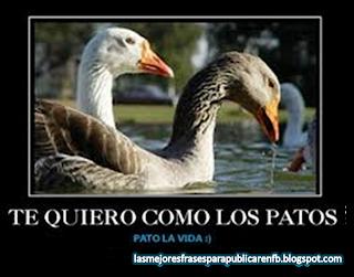 Frases De Amor: Te Quiero Como Los Patos Pato la Vida