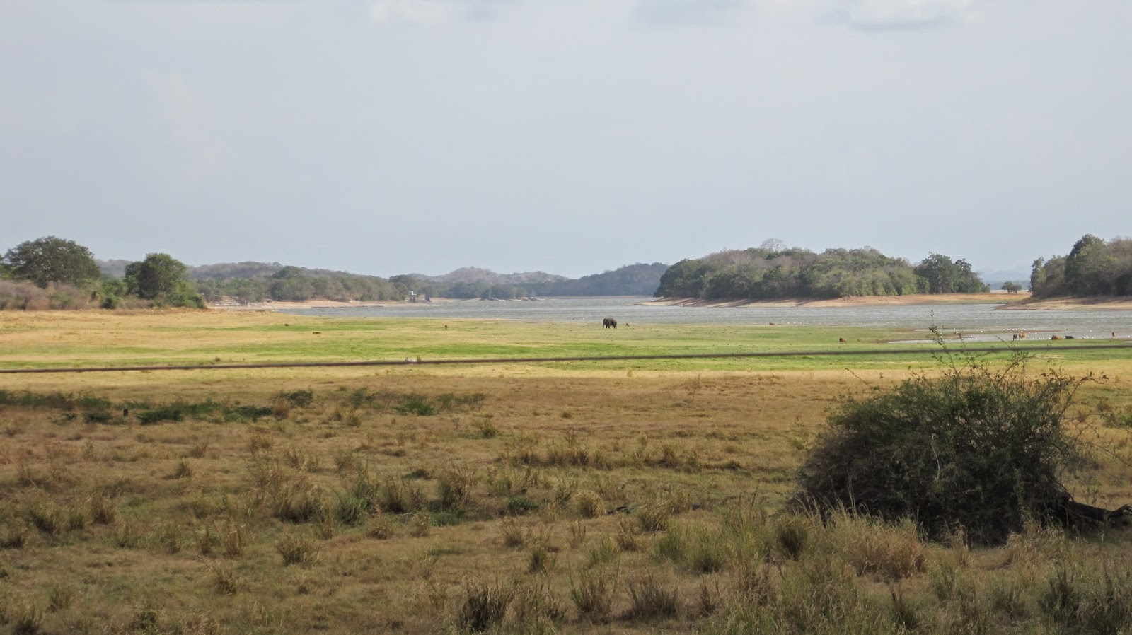 Parque Nacional de Minneriya (Sri Lanka)