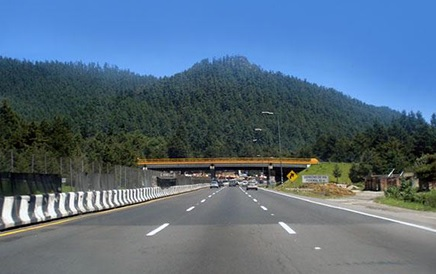 Árboles Estado de México