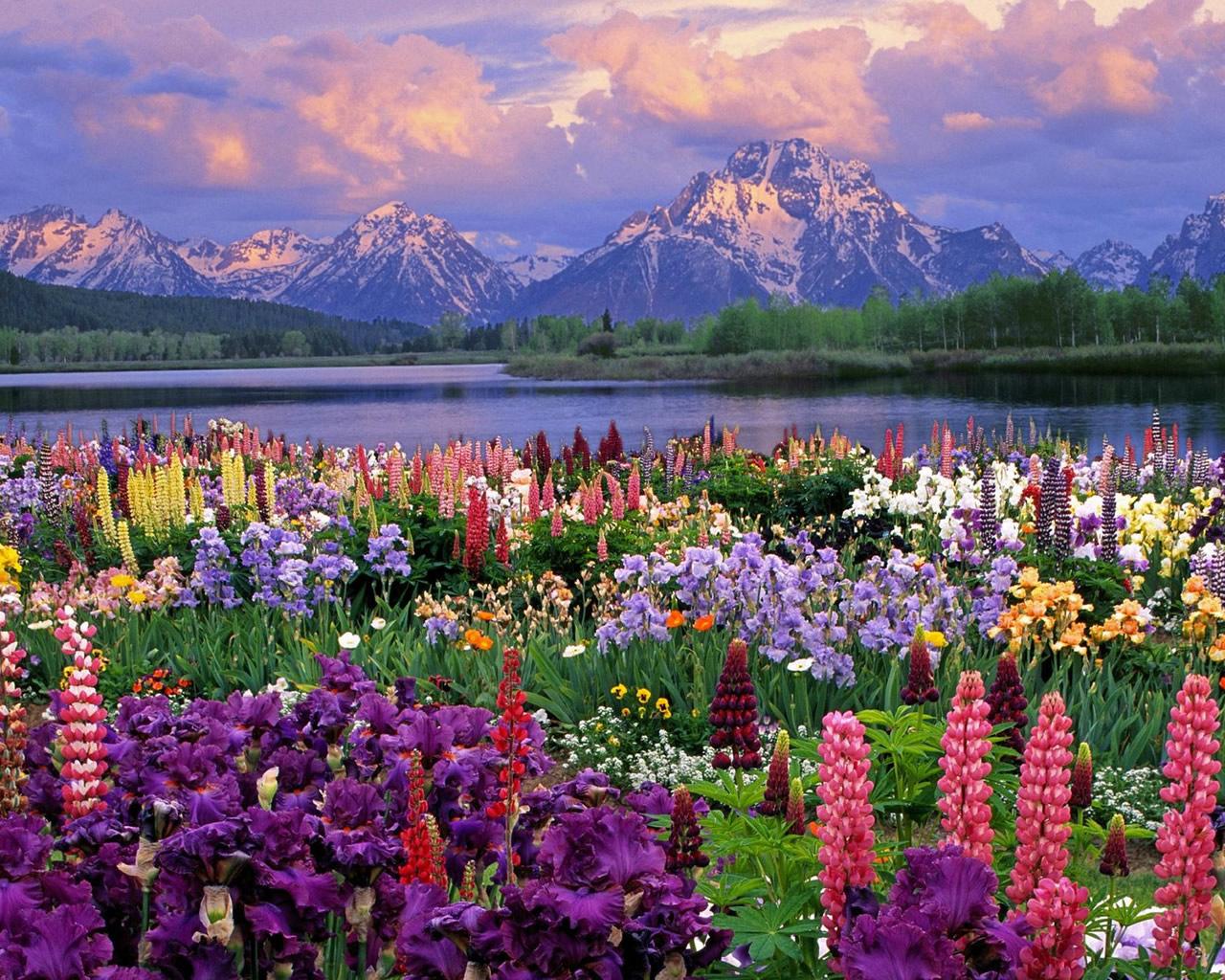 Imagini De Primavara   Peisaje Cu Flori De Primavara Poze Si Imagini