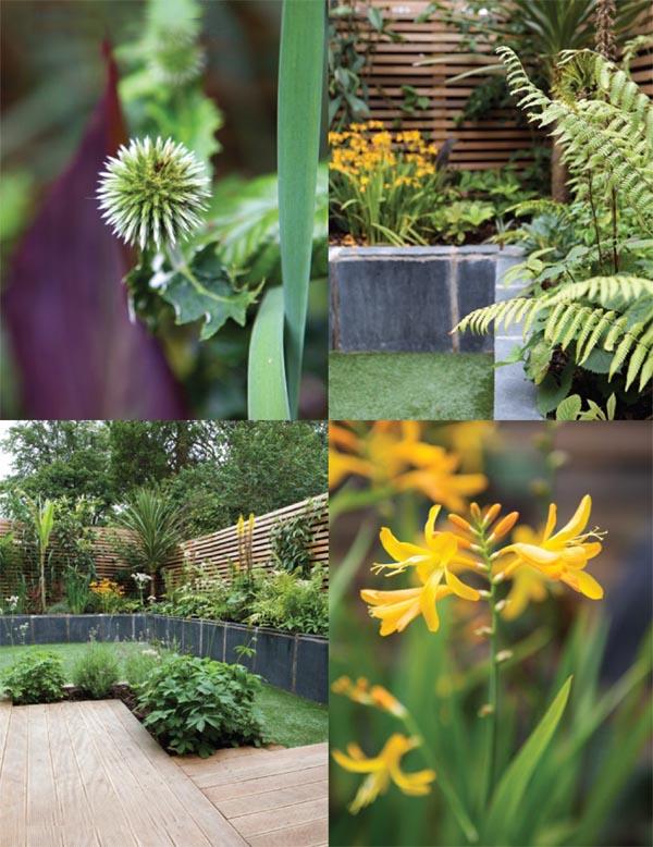 detalles de flores y arbustos del jardín