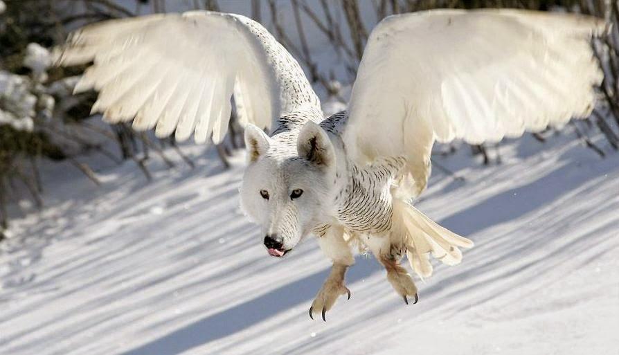 Imagenes de animales surrealistas; Extrañas imagenes.: Becharin