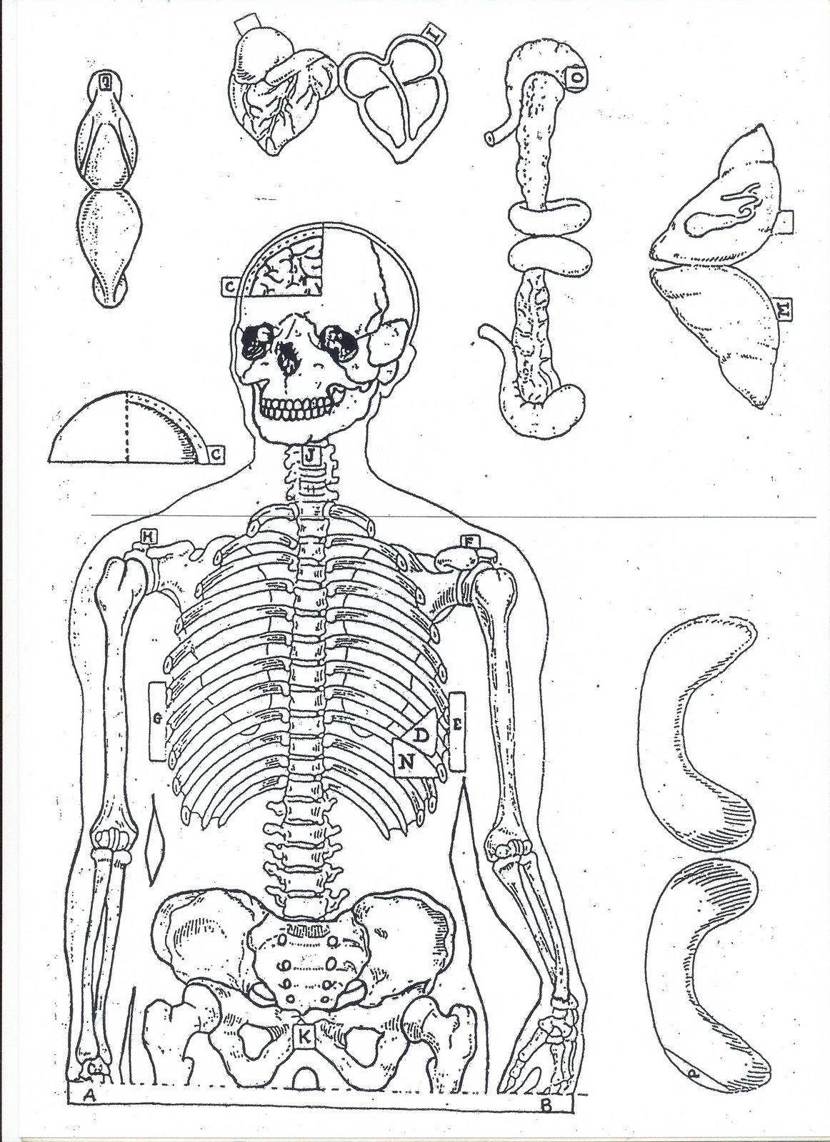 Esqueleto Humano Para Recortar Atividades Pra Colorir Ptaxdyndns