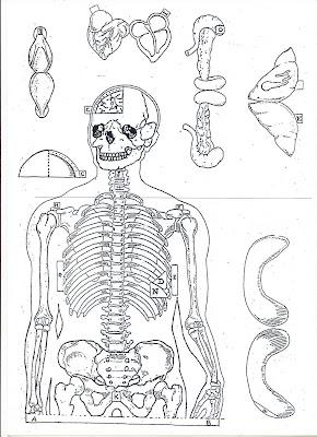 Esqueleto humano para colorir
