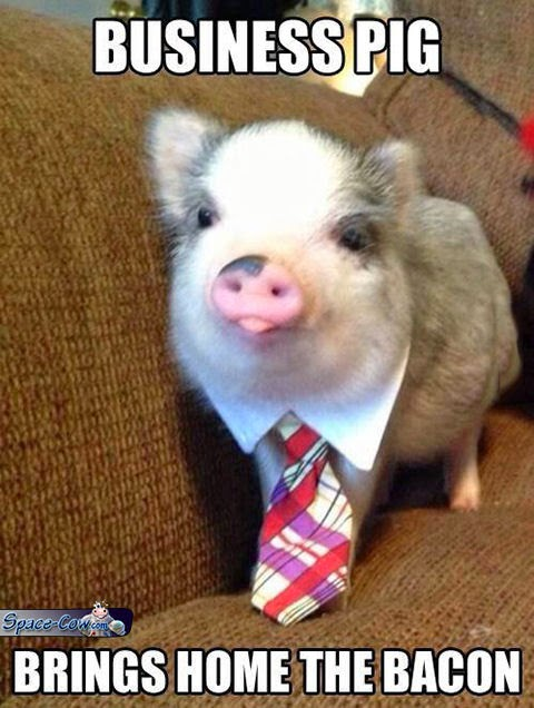 funny cute pig picture