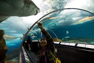 10 Aquarium Paling Besar di Dunia